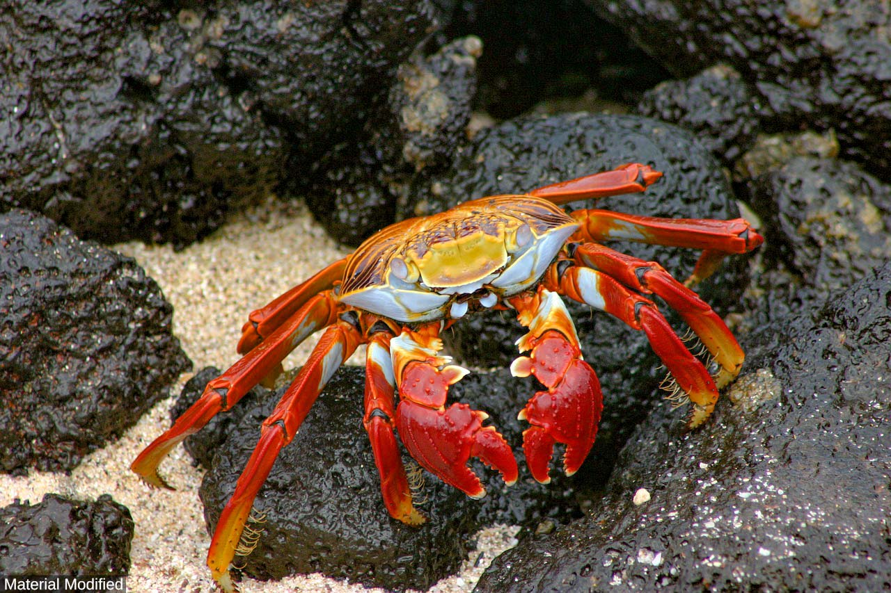 Ecuador & Galapagos Islands: See & Do Almost it ALL in 11 Days, 1st Class Traveling